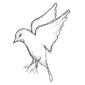 logo bird sketch